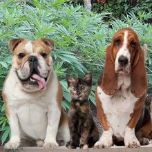 Claws and Effect: Cannabis Medicine for Pets