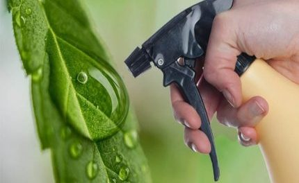 Burning Issue: Cannabis Pesticide Regulations Need Rethink