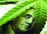 Green Rush Blues: California Cannabis After Legalization (Part 1)