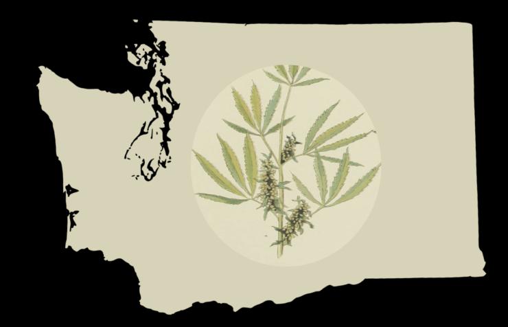 Washington Marijuana: State May Allow CBD Additives