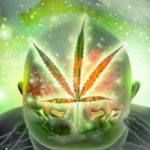 Drug Memories: CBD and Addiction