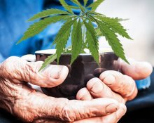 Complete Guide to Medical Marijuana for Seniors