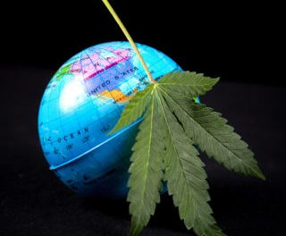 Cannabis and International Trade: Don't Ignore the U.S.-China Trade War