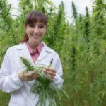 Hemp Contracts: What Business Can Learn from Oregon State's New Research Facility
